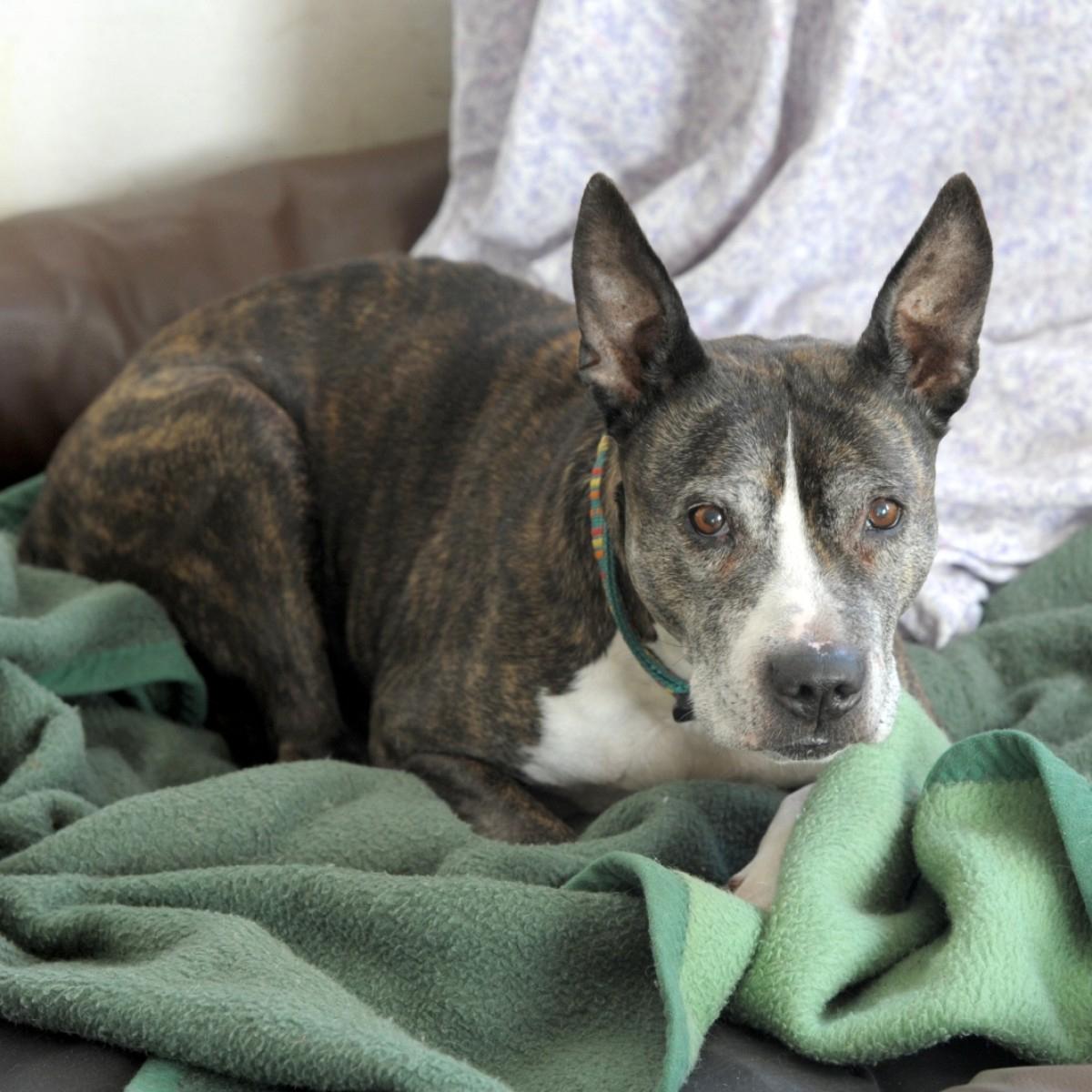Verbotene Hunderassen: Im Zweifel Hilft Ein Dna-Test   Svz.de über Hunderasse Kreuzworträtsel
