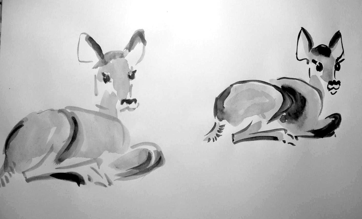 Vereinfachte Malweise - Reh - Malen Und Zeichnen Als Hobby bestimmt für Reh Zeichnen