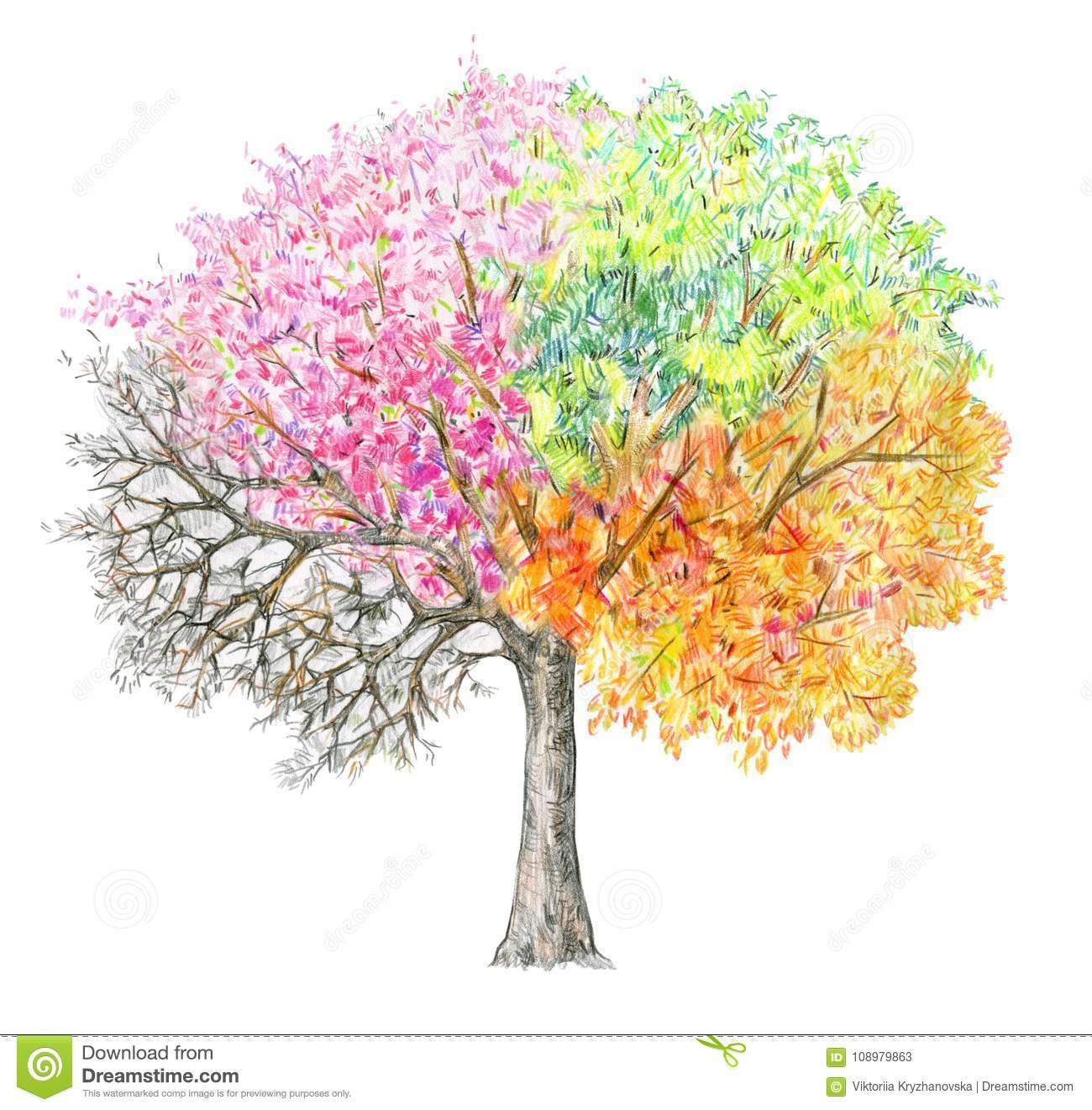 Vier Jahreszeiten Baum Handdrawing Lokalisiert Stock innen 4 Jahreszeiten Baum