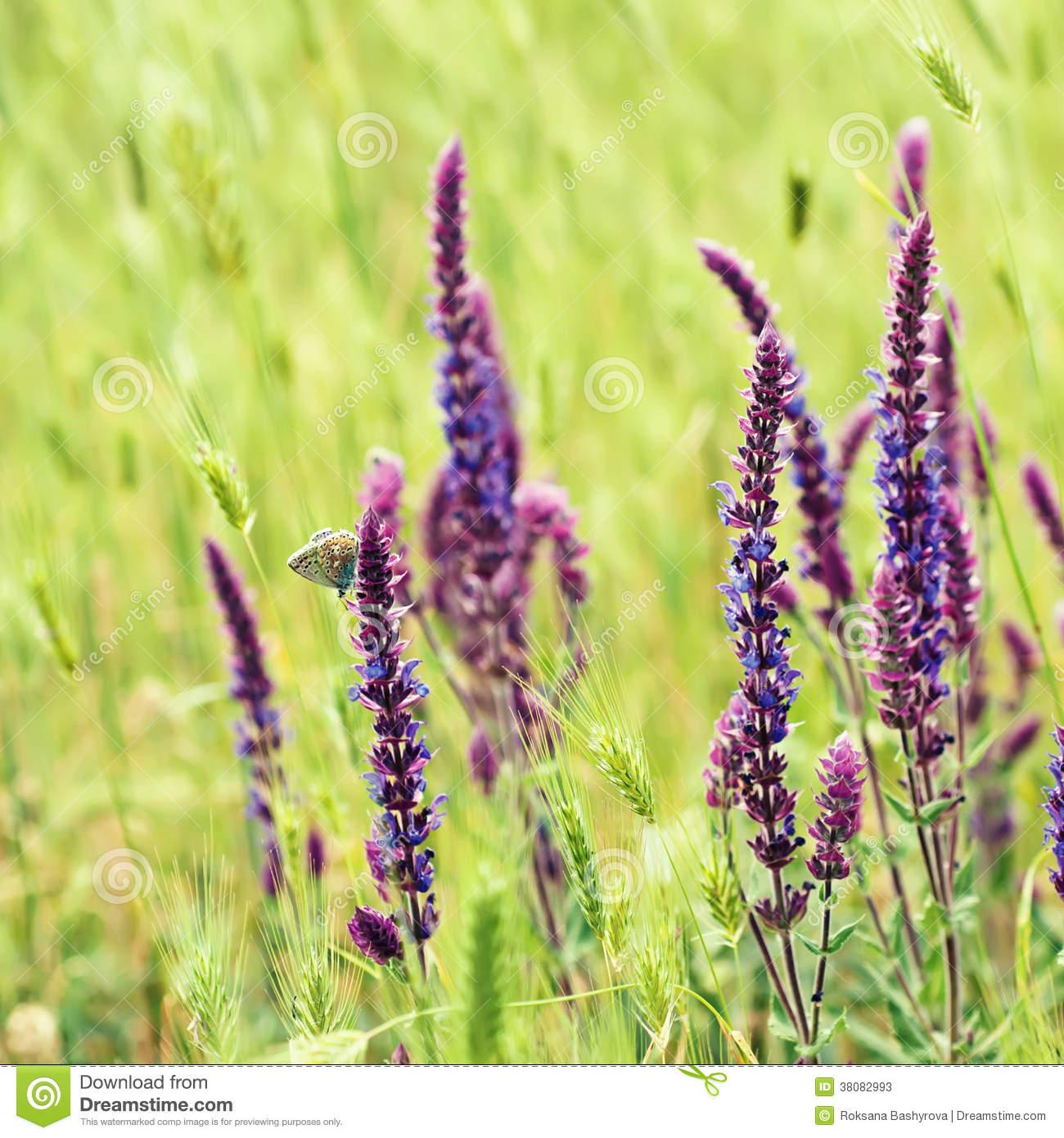 Violette Wiesenblume Stockbild. Bild Von Frühling, Bunt mit Wiesenblume Violett