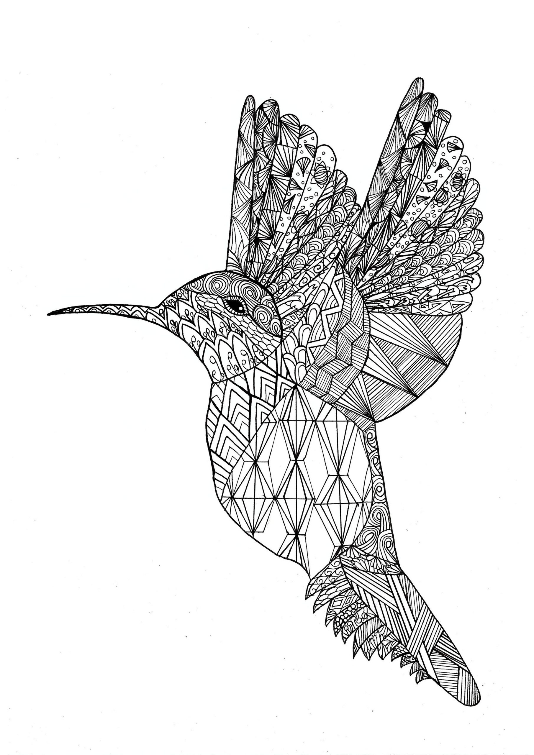 Vogel 22808 - Vögel - Malbuch Fur Erwachsene über Mandala Vogel