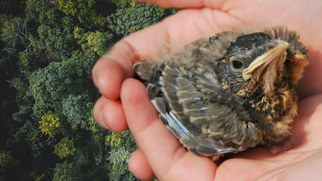 Vogel Aus Dem Nest Gefallen, Was Tun? ganzes Meise Aus Dem Nest Gefallen Was Tun
