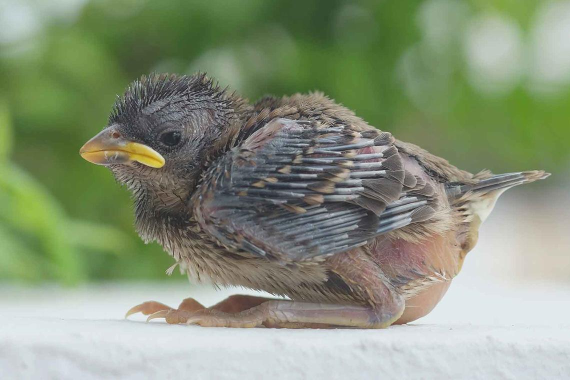 Vogel Aus Dem Nest Gefallen – Was Tun? | Wwf Blog bei Meise Aus Dem Nest Gefallen Was Tun
