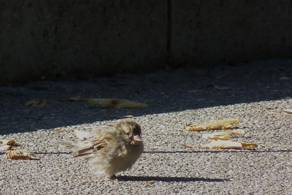 Vogel Aus Dem Nest Gefallen – Was Tun? | Wwf Blog mit Meise Aus Dem Nest Gefallen Was Tun