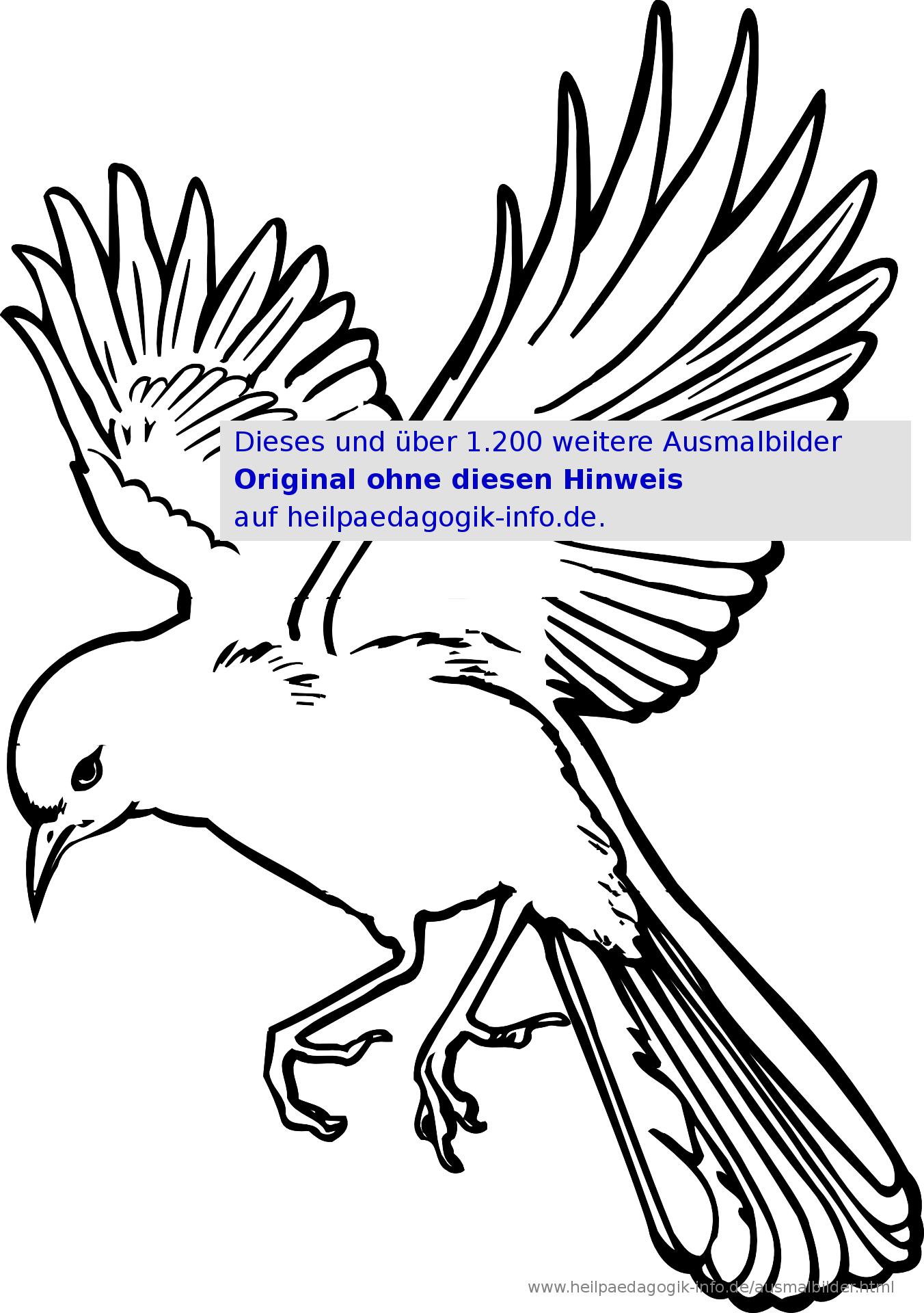 Vogel Malvorlage Zum Ausmalen | Coloring And Malvorlagan verwandt mit Vogel Zum Ausmalen