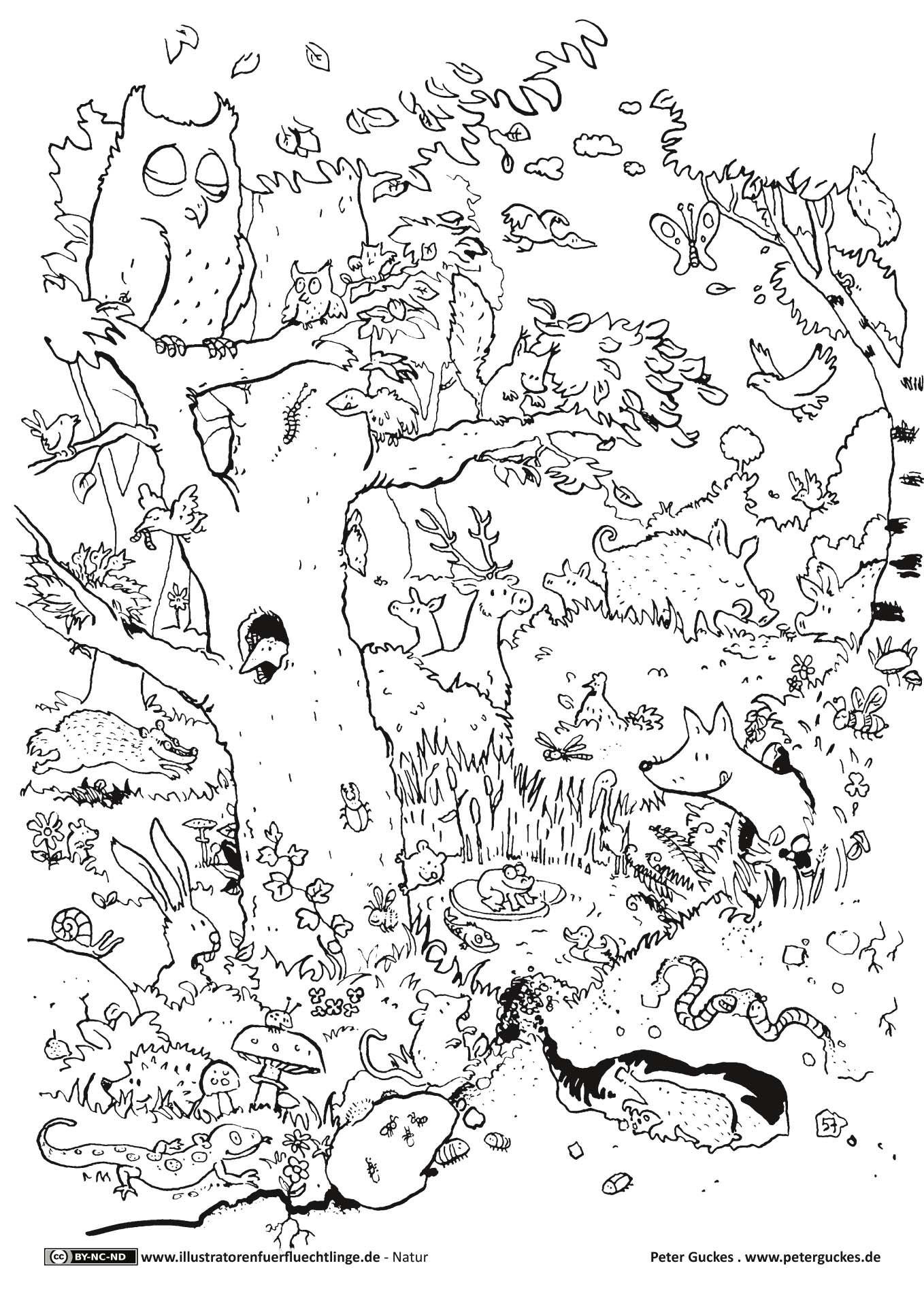 Wald Tiere | Ausmalen, Ausmalbilder Tiere, Malvorlagen ganzes Wald Ausmalbild