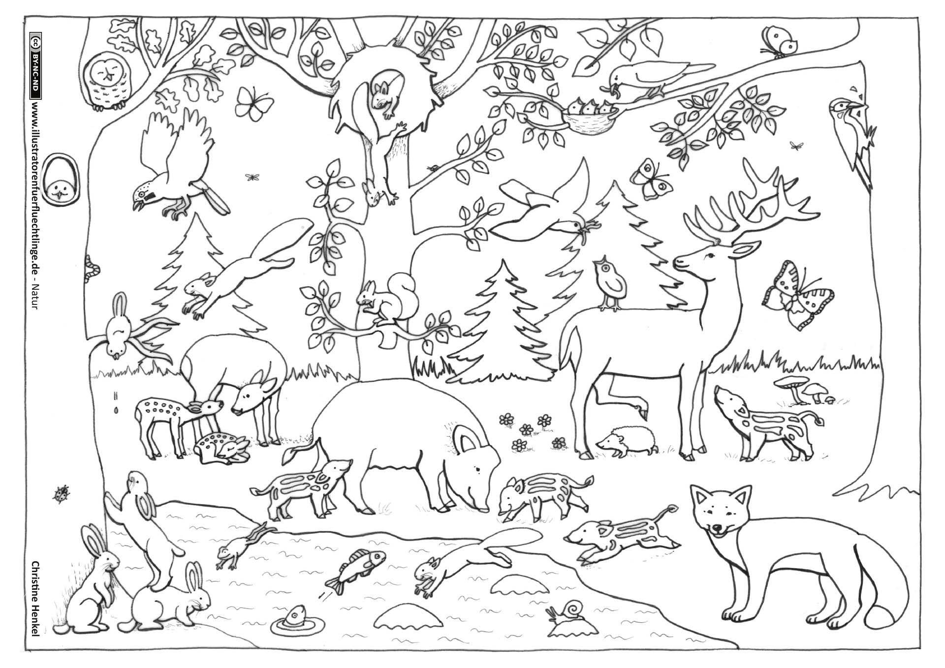 Wald Tiere (Mit Bildern) | Malvorlagen Tiere, Tiere Des ganzes Wald Ausmalbild