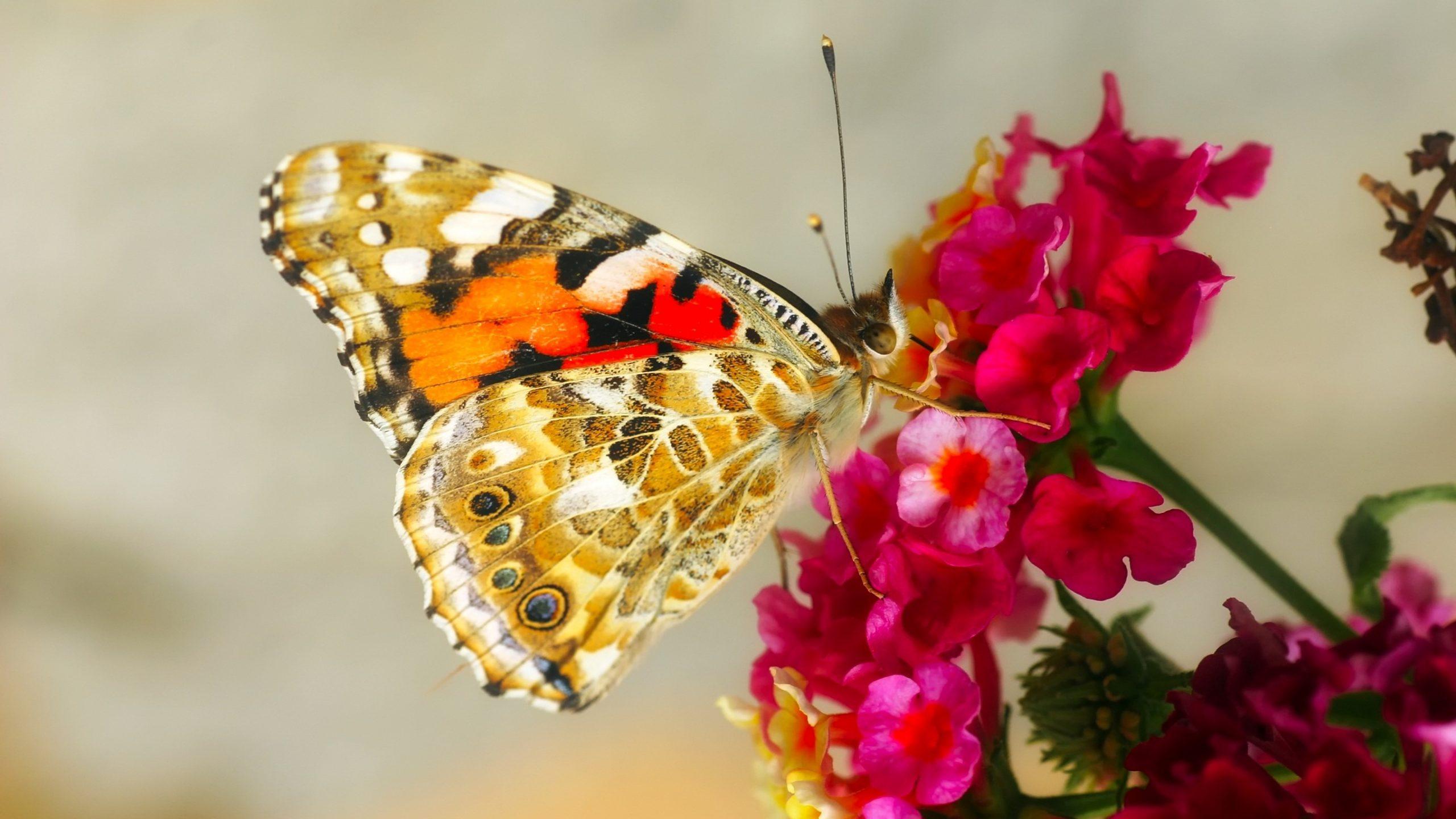 Wallpaper Blumen Und Schmetterlinge verwandt mit Hintergrundbilder Blumen Und Schmetterlinge