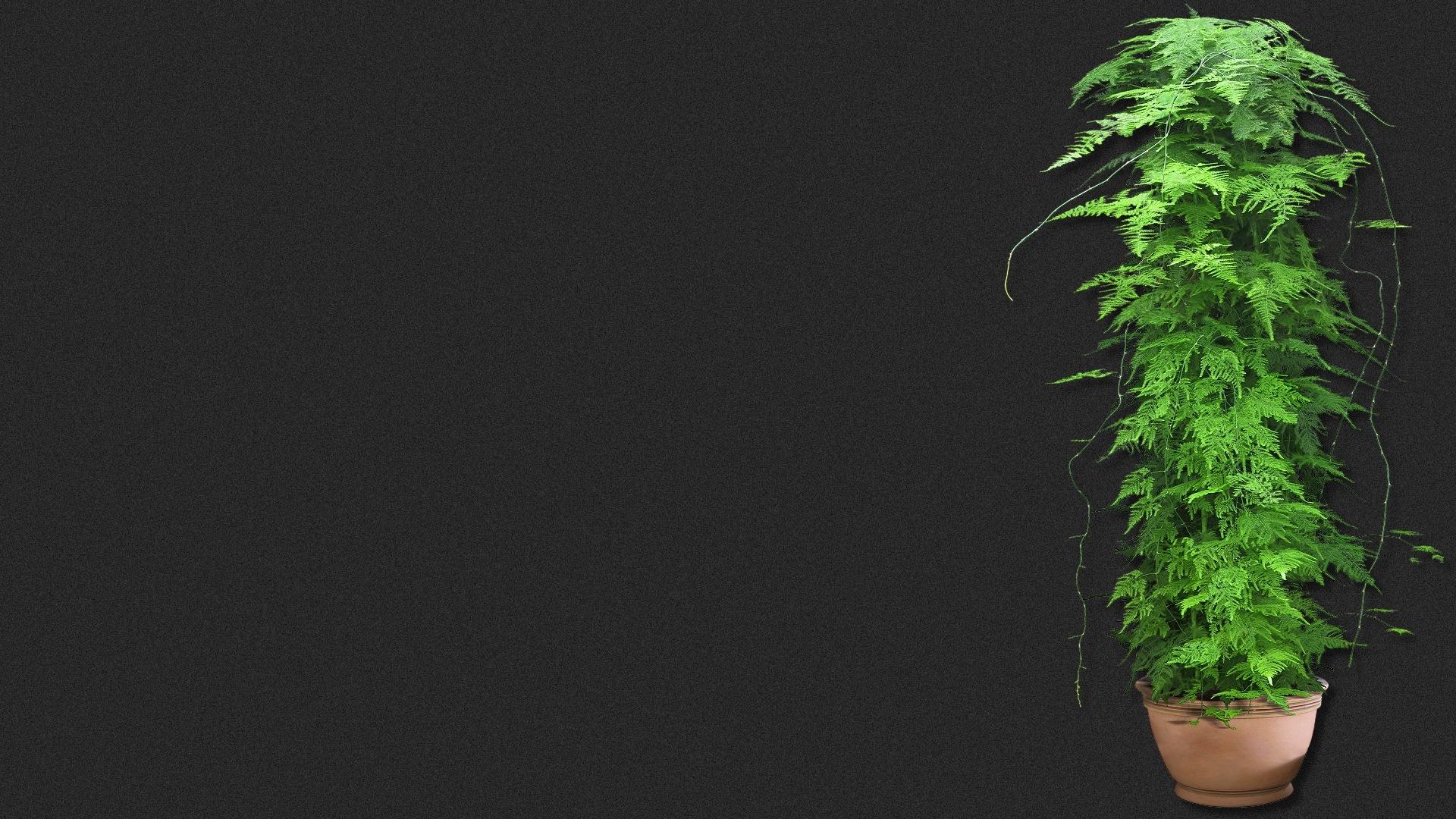 Wallpaper Pflanzen Kostenlos verwandt mit Pflanzen Bilder Kostenlos