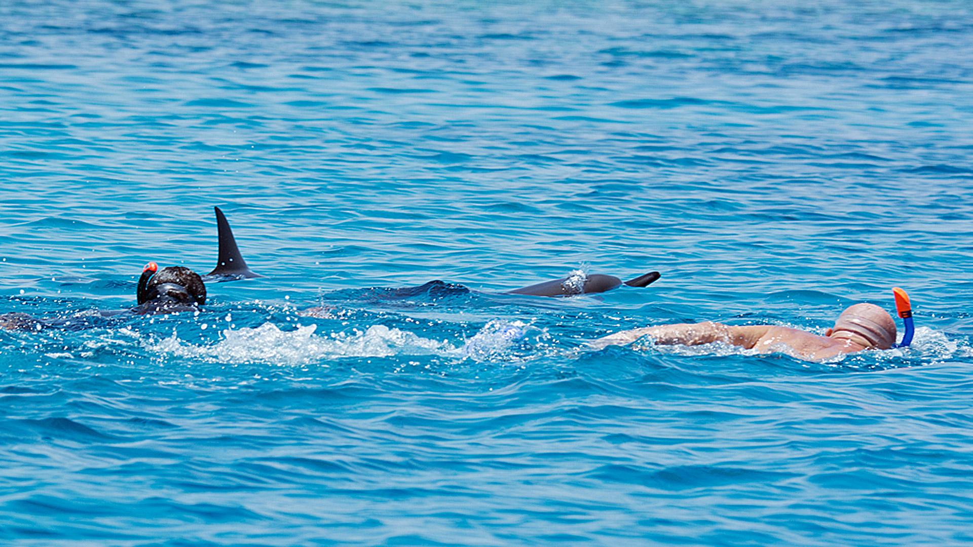Warnung Vor Dem Schwimmen Mit Delfinen Im Roten Meer! - Grd bestimmt für Warum Heißt Das Rote Meer Rotes Meer