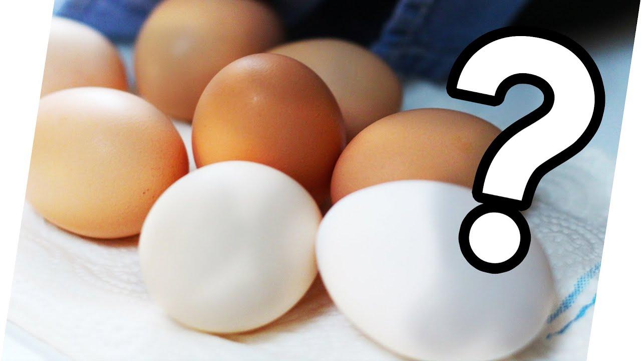 Unterschied Braune Und Weiße Eier