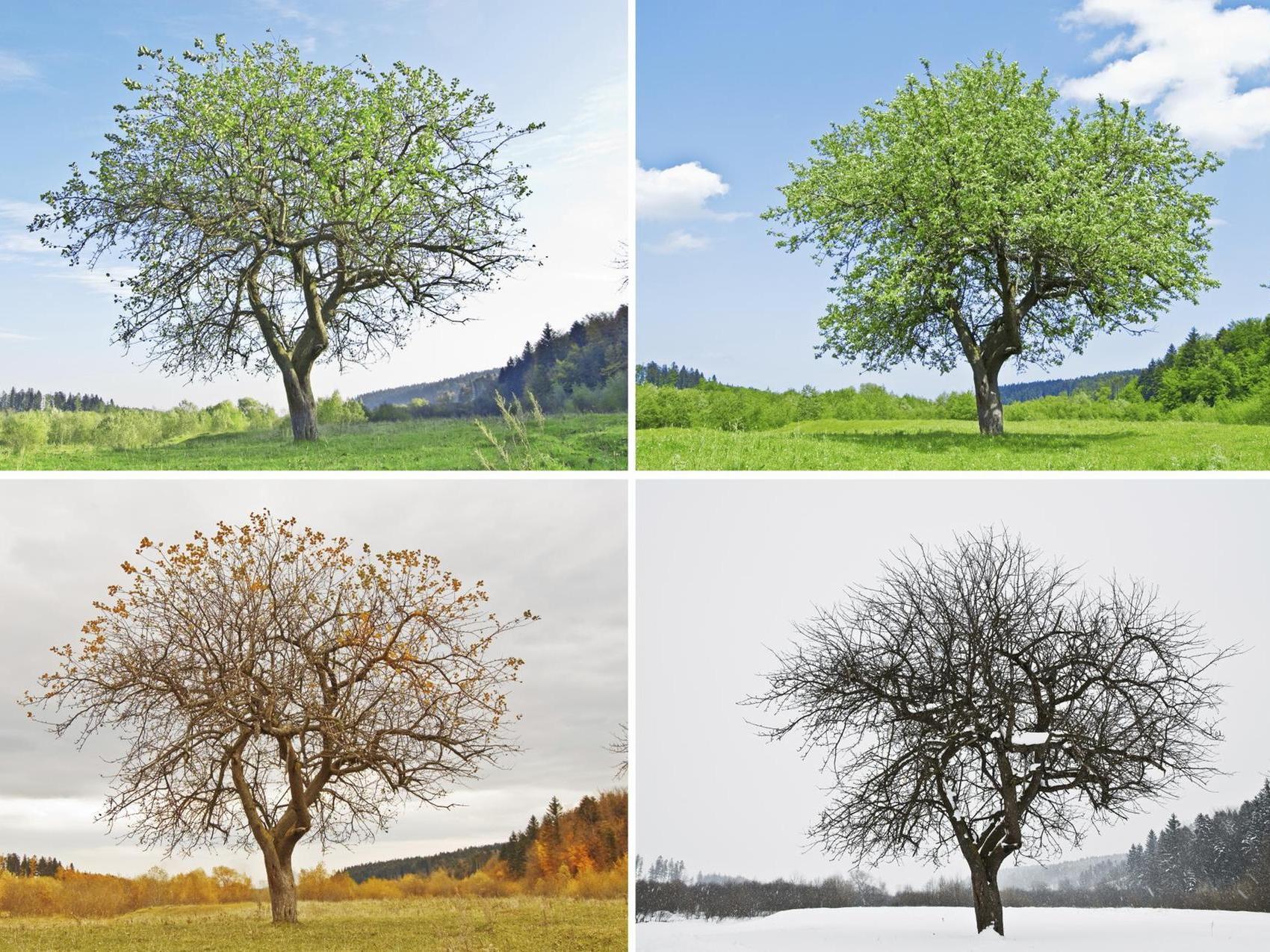 Warum Gibt Es Jahreszeiten? Wetterwechsel Einfach Erklärt für Beginn Der Jahreszeiten