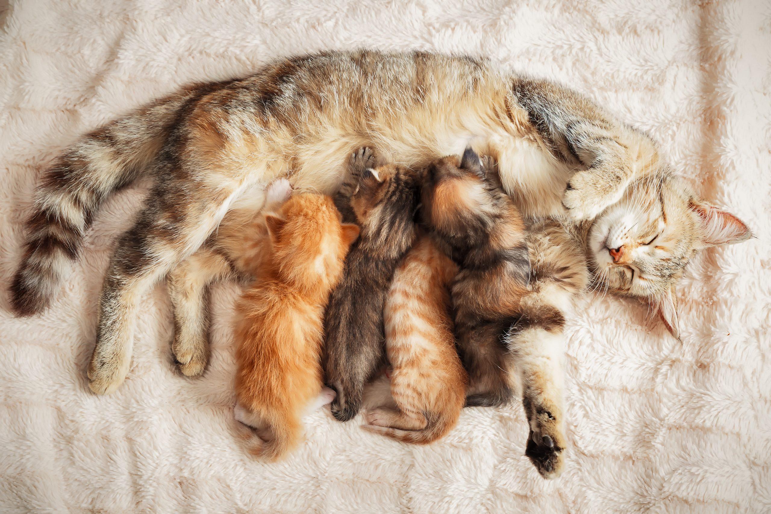Warum Schnurren Katzen Eigentlich? - Uelzener Versicherungen innen Was Bedeutet Es Wenn Eine Katze Schnurrt