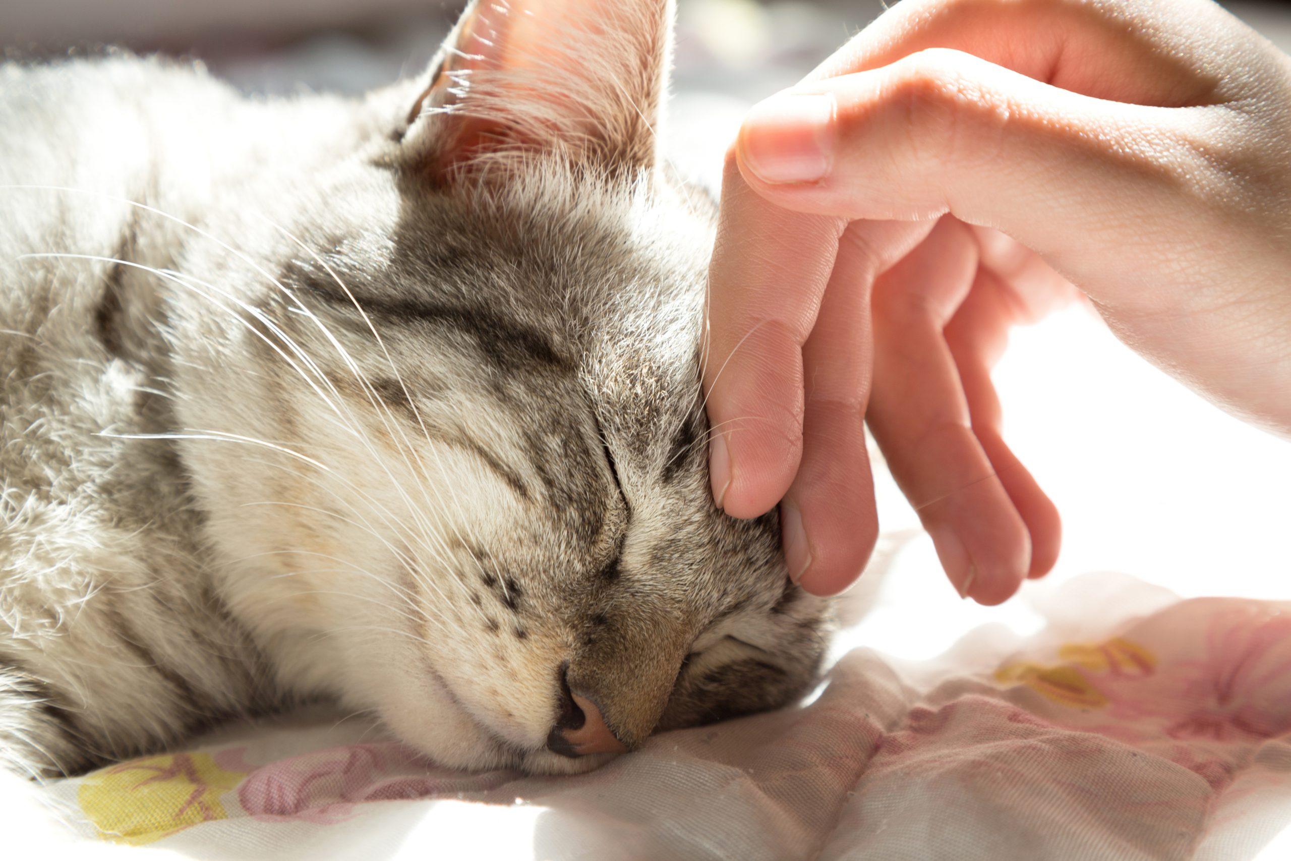 Warum Schnurren Katzen Und Wie Machen Sie Das? | Zooplus bestimmt für Was Bedeutet Es Wenn Eine Katze Schnurrt