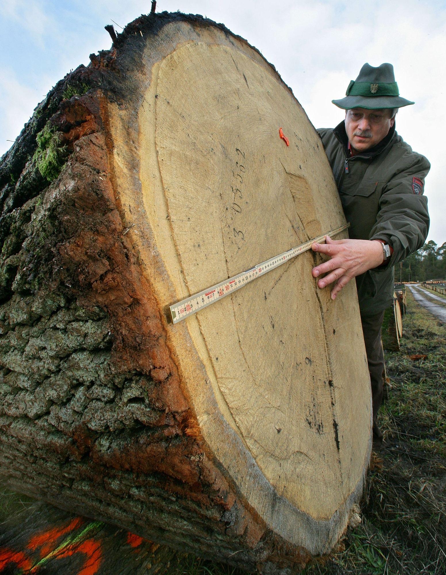 Was Bäume Über Das Klima Verraten - Weser-Kurier innen Wie Entstehen Jahresringe Bei Bäumen