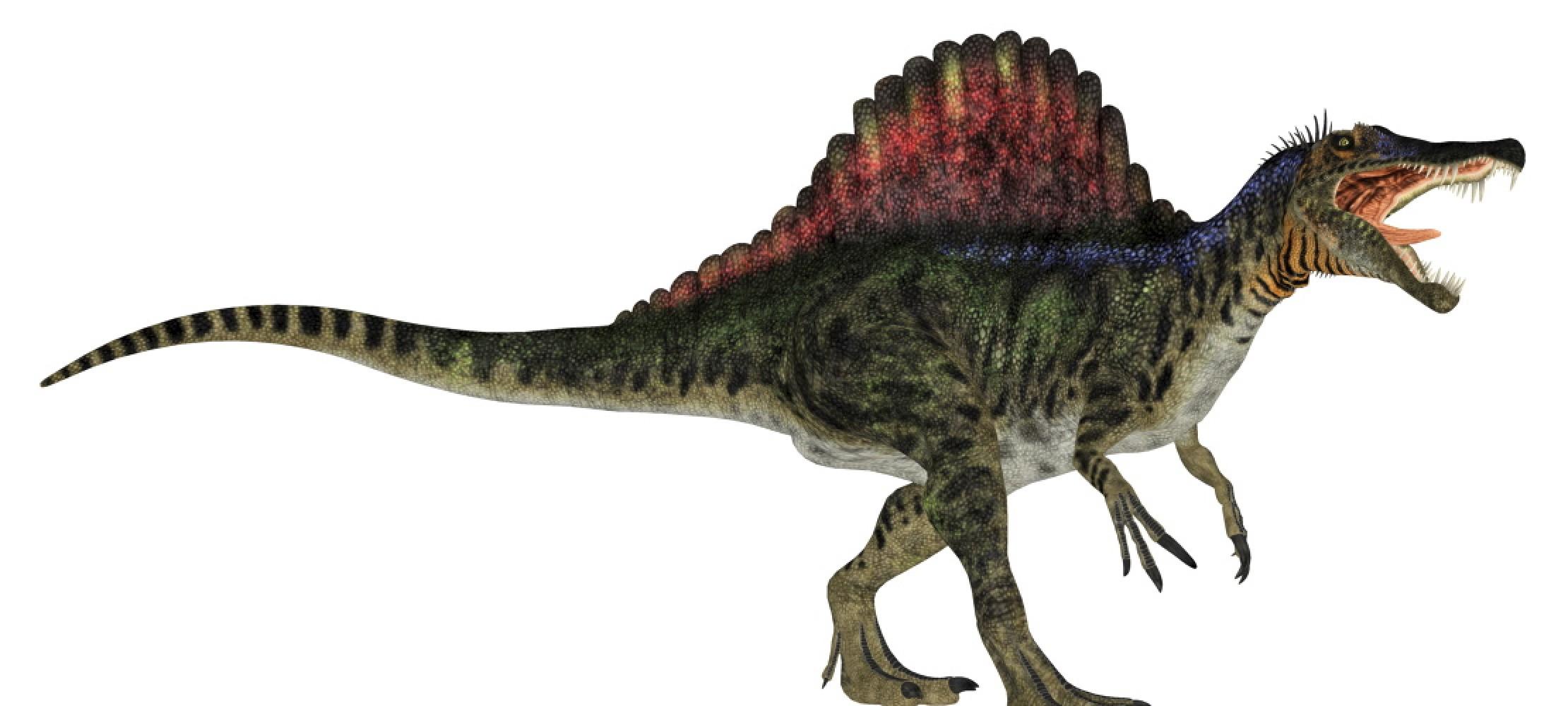 Was Du Über Dinosaurier Wissen Musst   Duda.news in Dinosaurier Namen Und Bilder
