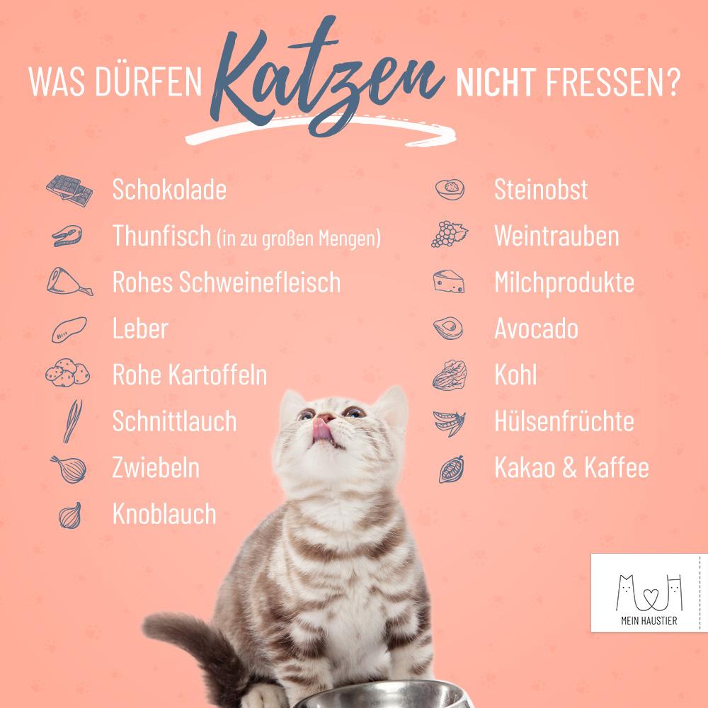 Was Dürfen Katzen Nicht Fressen? Diese 10 Lebensmittel Sind innen Was Passiert Wenn Katzen Alkohol Trinken