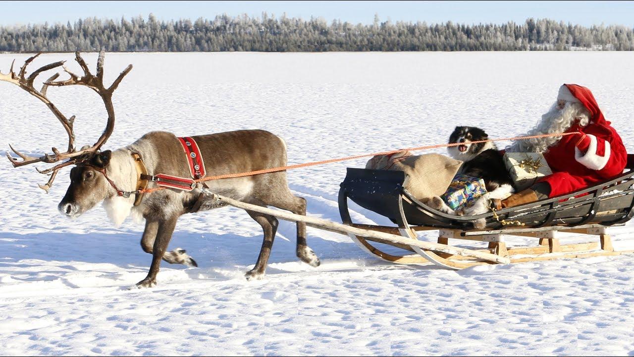 Weihnachtsmann & Rentieren: Beste Rentierschlittenfahrten Des  Weihnachtsmannes Für Kinder Lappland in Weihnachtsmann Rentierschlitten