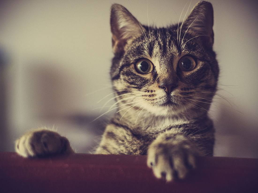 Wenn Die Katze Sabbert, Was Dahinter Stecken Könnte über Was Bedeutet Es Wenn Eine Katze Schnurrt