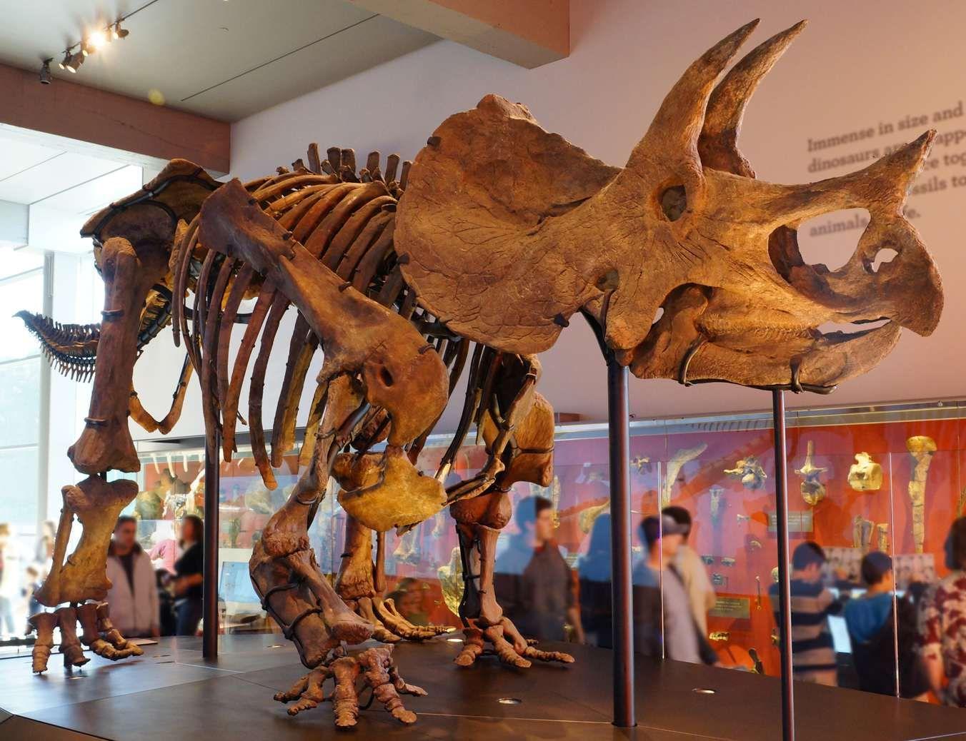 Which Dinosaurs Once Lived In Your State? (Mit Bildern innen Dreihorn Dinosaurier