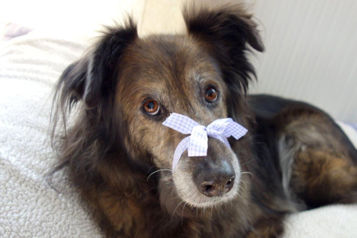Wie Kann Ich Dem Hund Das Bellen Abgewöhnen? - Dipthdesign mit Warum Bellt Mein Hund Wenn Es Klingelt