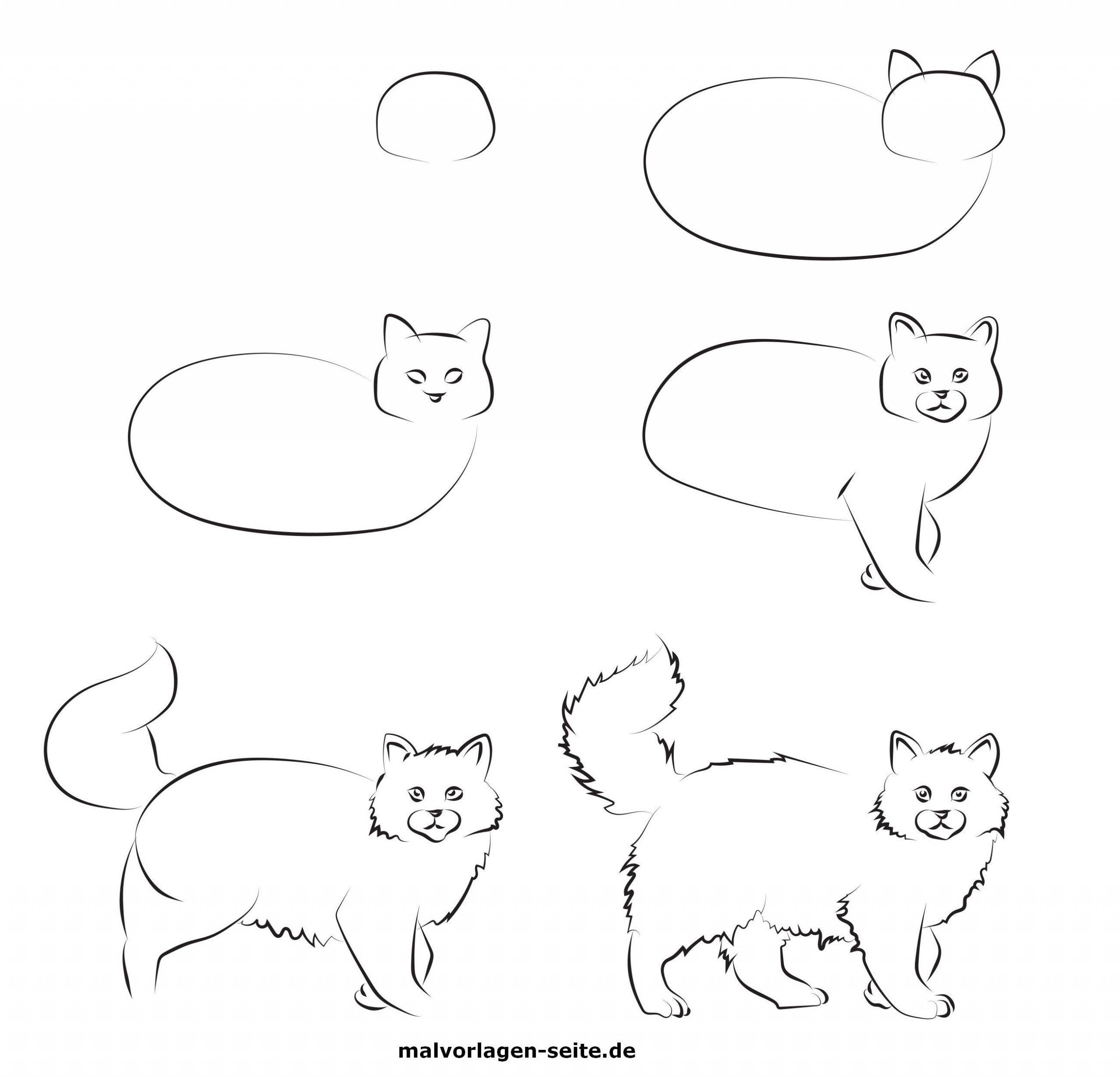 Wie Malt Man Eine Katze? - Ausmalbilder Kostenlos Herunterladen bestimmt für Katze Malen Einfach