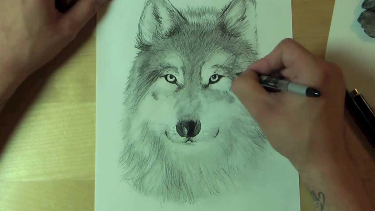 Wie Zeichnet Man Einen Wolf ?! How To Draw bestimmt für Wölfe Zeichnen