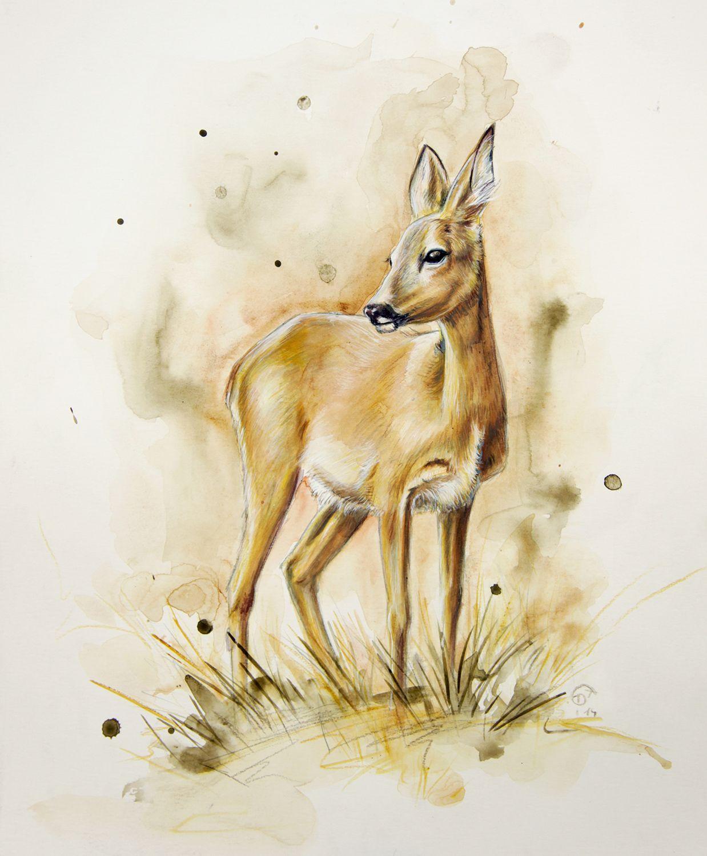 Wild Animals | Rehe Zeichnen, Tierzeichnung, Reh Bilder bestimmt für Reh Zeichnen