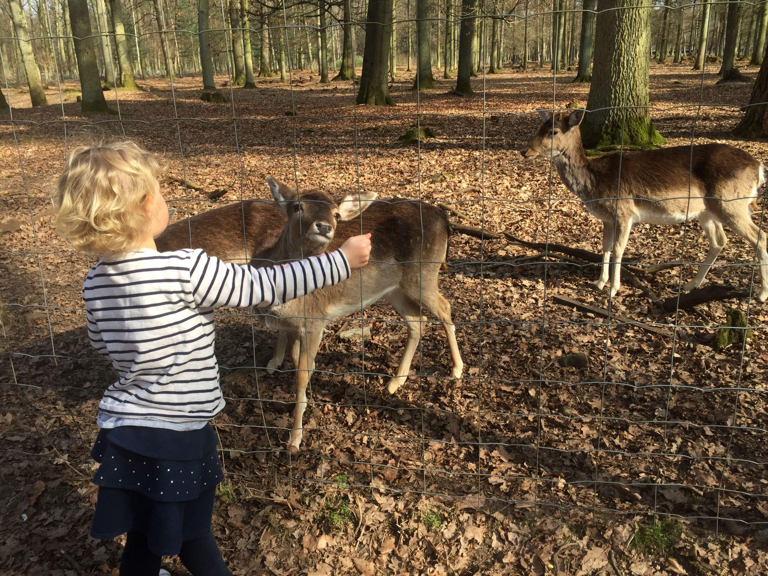 Wildpark Alte Fasanerie - Auslangd bei Wildpark Frankfurt Oder Öffnungszeiten