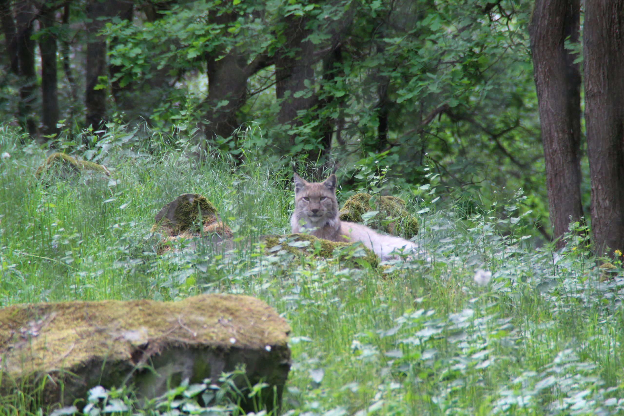 Wildpark Alte Fasanerie Hanau - Mykidds über Wildpark Frankfurt Oder Öffnungszeiten