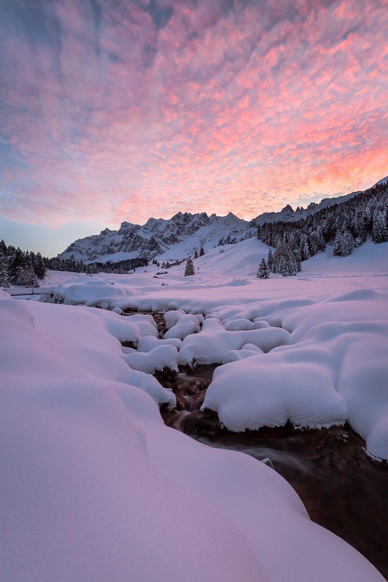 Winterbilder !-Bild Von Mausi Reh In 2020 | Bilder in Winterbilder Zum Ausdrucken