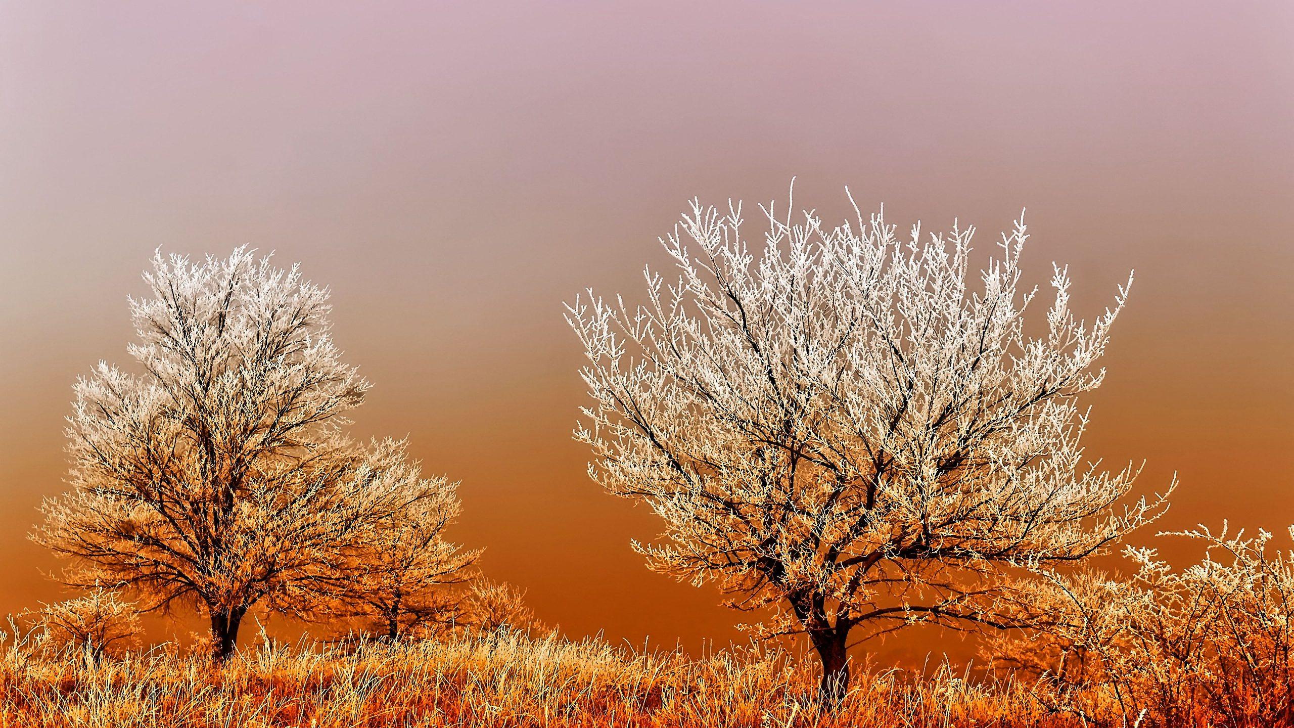 Winterbilder Kostenlos Ausdrucken bei Winterbilder Zum Ausdrucken