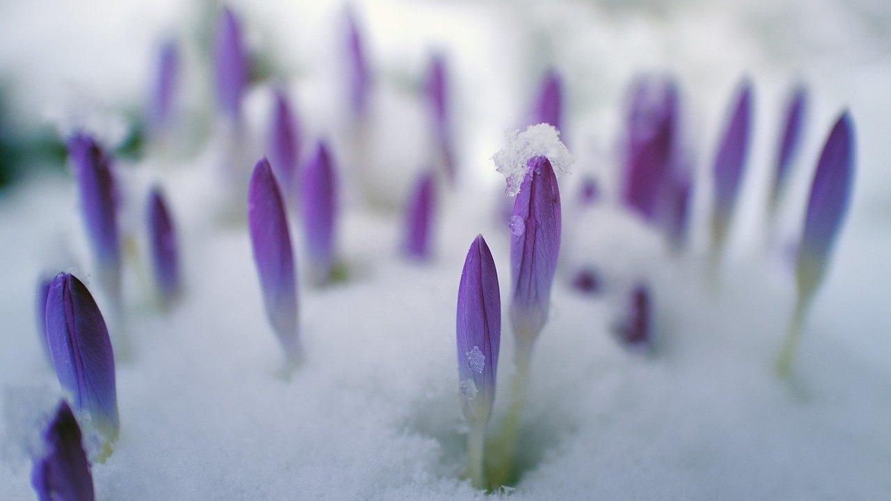 Winterharte Blumen: 5 Schöne Sorten - Utopia.de bei Blume Mit 6 Buchstaben