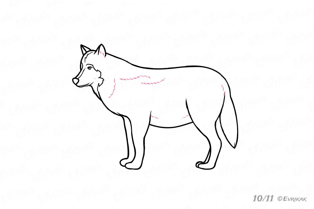 Wir Lernen, Wie Einen Wolf Schritt Für Schritt Zu Zeichnen. bei Wölfe Zeichnen