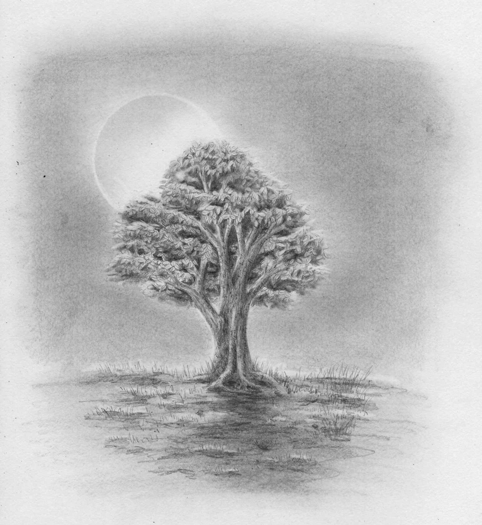Zeichnen Lernen - Baum Laubbaum Blätter Stamm Blattwerk in Einfache Landschaften Zeichnen