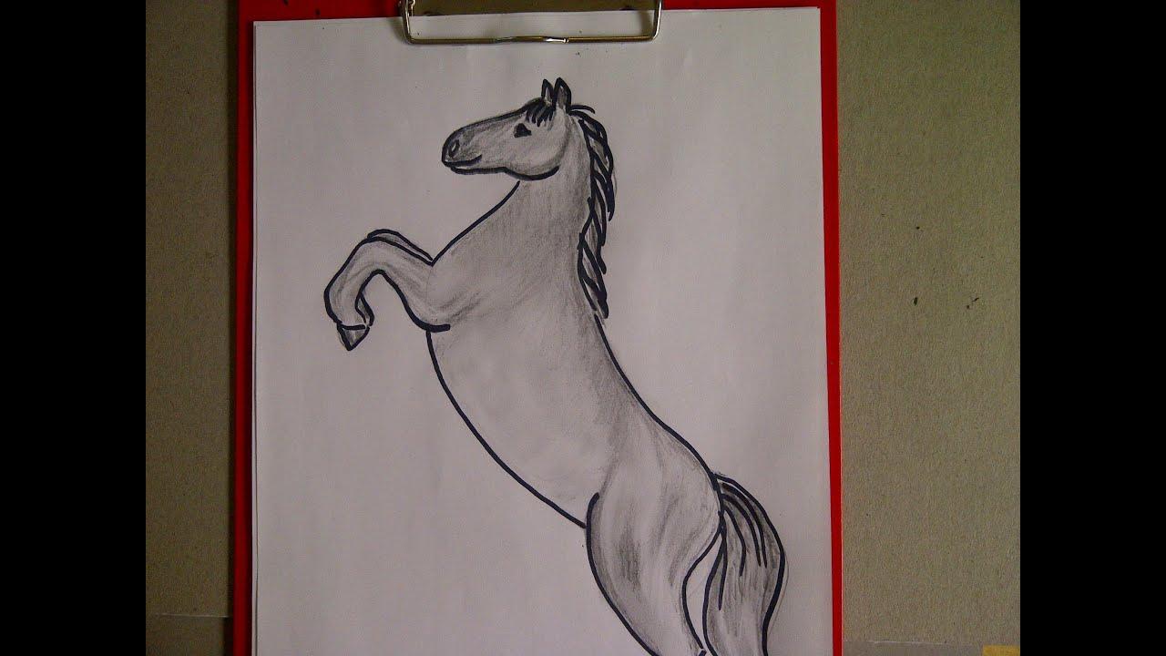 Zeichnen Lernen Für Anfänger. Pferd Malen. Pferdeportrait. Learn To Draw A  Horse für Steigendes Pferd Zeichnen