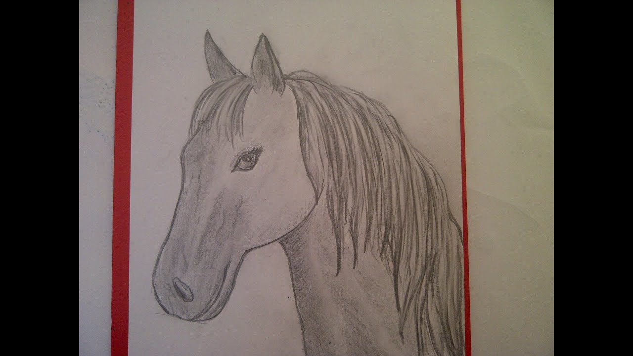 Zeichnen Lernen Für Anfänger. Pferd Malen. Pferdeportrait. Pferdekopf.  Learn To Draw A Horse für Pferde Zeichnen Lernen Für Anfänger