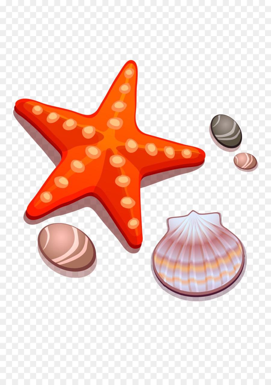 Zeichnung Cartoon-Seestern-Muschel - - Muscheln Und mit Comic Muschel