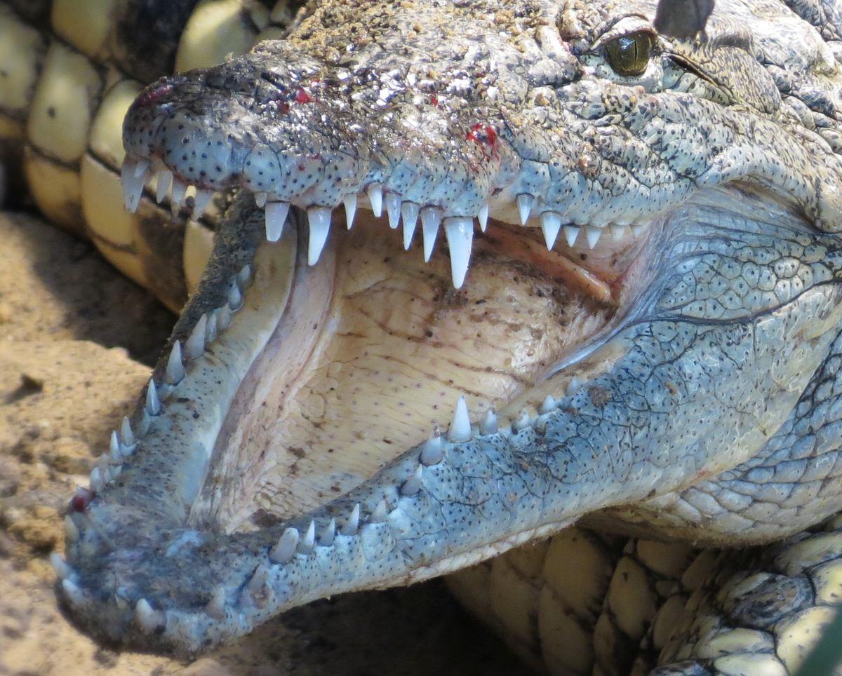Zu Besuch In Der Crocworld In Erfurt | Bei Emil ganzes Warum Weinen Krokodile Beim Fressen